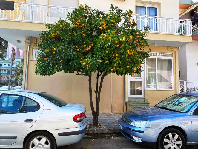 Naranjo-callejero